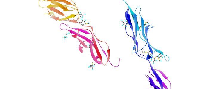 Moléculas en una adhesión intercelular
